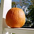 Pumpkin26110008