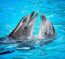 Dolphins-thumb11027936